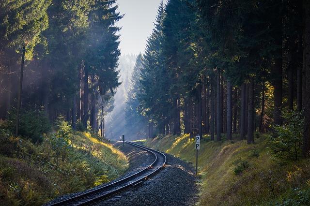 koleje mezi lesy