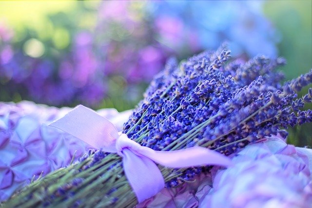 svazek levandulových květů